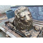 Лев большой фото