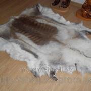 Шкура оленя (финского) 03 фото