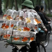 Перевезти, переставить аквариум, перевозка аквариумов фото