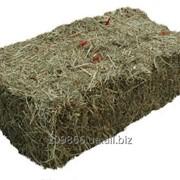 Луговое сено фото