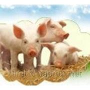 Комбикорм для свиней 20-45 кг, КС ВМ S 8398 ТМ BEST MIX, Днепропетровск фото