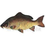 Комбикорм для рыбы, карп 2-3 леток СП 26% (Украина),цена отличная