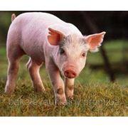 Пуріна Гровер/Фінішер концентрат для свиней фото