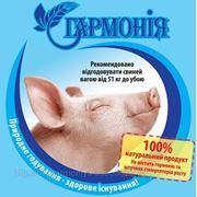 Откорм для свиней более 50 кг и до убоя фото
