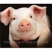 Пуріна Фінішер концентрат для свиней фото
