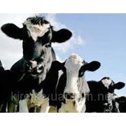 Концентраты для коров / КРС ТМ BEST MIX. Оптом и в розницу, Днепропетровск фото