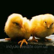 "Престарт для цыплят кур-несушек (кросс Ломанн) ТМ""Feed&Life"" фото"