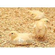 """Старт для цыплят кур-несушек с кокцидиостатиком ТМ""""Feed&Life"""" фото"""