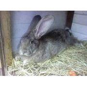 "Для откорма кролей (травяная мука 10 % ) ТМ""Feed&Life"" фото"