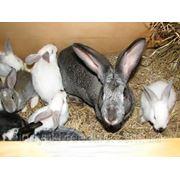 """Для крольчат при отъеме и лактирующих крольчих ТМ""""Feed&Life"""" фото"""