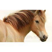 """Для откармливаемых лошадей ТМ""""Feed&Life"""" фото"""