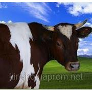Концентраты для коров, КРС BEST MIX фото
