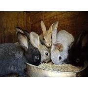 Комбикорм для кролей ПК - 91