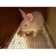 Комбікорм для кролів ТМ Селевана К 92-2 віком від 30 днів і більше
