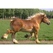 "Для рабочих лошадей ТМ""Feed&Life"" фото"