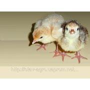 Комбикорм для выращивания: несушек, бройлеров, перепелов, гусей, уток, индейки (заказ более 500кг)