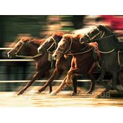"""Для тренируемых и спортивных лошадей ТМ""""Feed&Life"""" фото"""