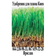 Удобрение для газона Нитроаммофоска, ам. селитра, карбамид, агролайф. Купить в Киеве