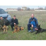 Охрана объектов с собаками фото