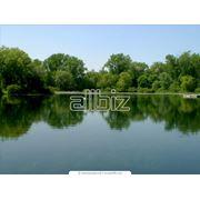 фото предложения ID 4129942