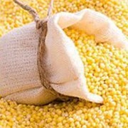 Куплю кукурузу кормовую фото
