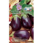 Семена баклажана .Плодоовощные культуры фото