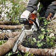 Предлагаем профессиональную обрезку деревьев Харьков фото