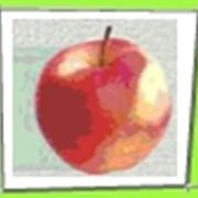 Яблоки сочные фото