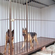 Вольер для собаки фото
