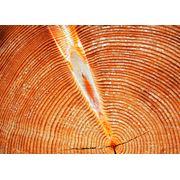 Тина Экспорт Ивано-Франковск. Производство пиломатериалов продажа и экспорт древесины вагонки деревянной из хвойных пород дуба и липы дров топливных из пород БУК ГРАБ. ДУБ паллетной заготовки евро стандарта топливных брикет типа RUF и Nestro фото