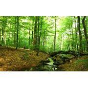 Лес строительный ясеньлес строительный соснаосина продажа фото