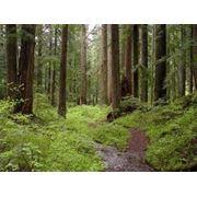 Лес строительный осина продажа фото