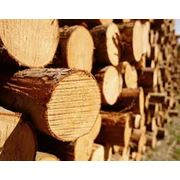 Круглые лесоматериалы фото