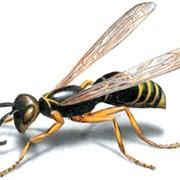 Дезинсекция, удаление вредных насекомых фото