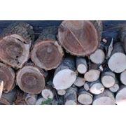 Фанера из древесины твердых пород Плиты и фанера Дерево пиломатериалы фото