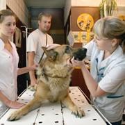 Услуги ветеринарные в павлодаре фото