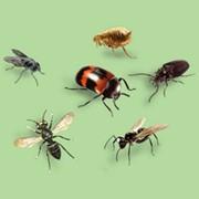 Дезинсекция - уничтожение насекомых фото