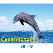 Дельфины фото