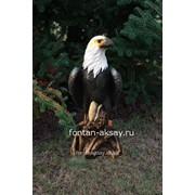 Орел малый фото