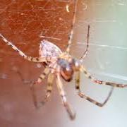 Уничтожение пауков, Алматы, в Алматы фото