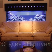 Дизайнерское оформление аквариумов фото