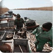 Оздоровительная программа для плавсостава рыболовного промысла и Торгового флота фотография