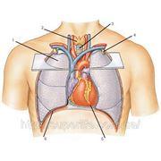 ЖКТ, сердечно-сосудистой системы, бронхолегочные, эндокринной системы, ОРЗ, ОРВИ фото