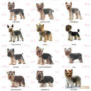 Стрижка (груминг) собак фото