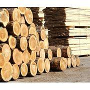 Предприятие лесоперерабатывающее фото