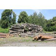 Деревообработка дерево пиломатериалы фото