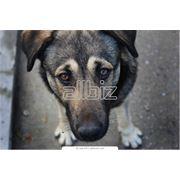 Помощь бездомным животным фото