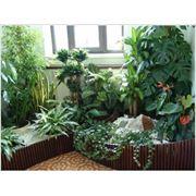 Уход,посадка,пересадка подбор комнатных офисных, растений. фото