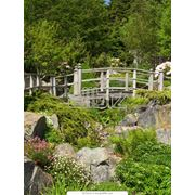 Устройство каменистых садов фото