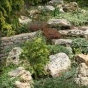 Альпинарии (альпийская горка) рокарии фото